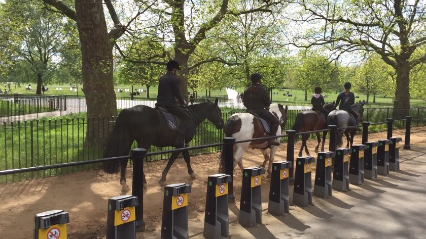 4 horses and their riders (2 children and 2 adults), walking through the park.