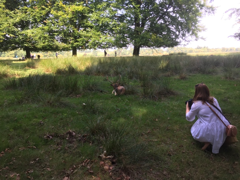 Emily kneeling in the grass, taking a photo of a large male deer laying down a short distance in front of her.