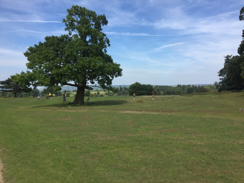 A large tree in the middle of a large area of grass, under a bright blue sky with light wispy clouds, the grassland extending towards more trees in the distance.