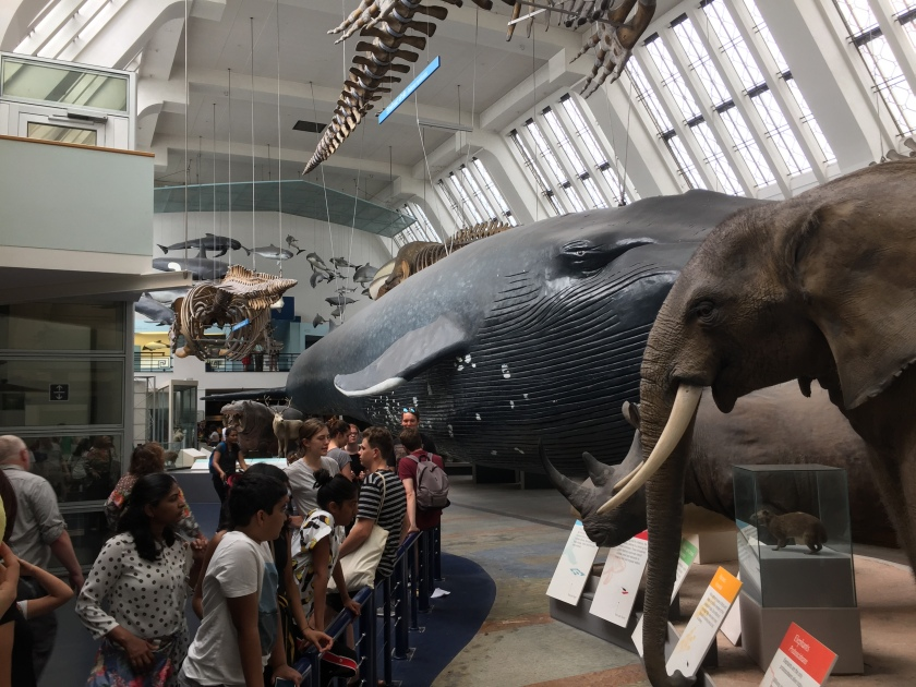 Mammals exhibition, dominated by a huge blue whale model down the room. Also visible are a few animal skeletons suspended from the ceiling, and models of an elephant and a rhino on the ground-level displays.