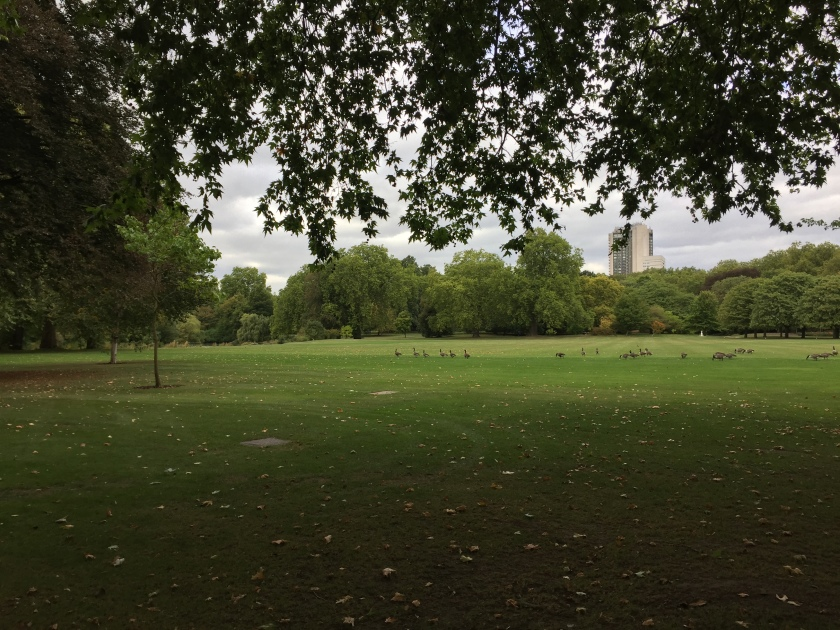 Large lawn area with trees around the perimeter at Buckingham Palace. Various birds can be seen walking or resting on the grass.