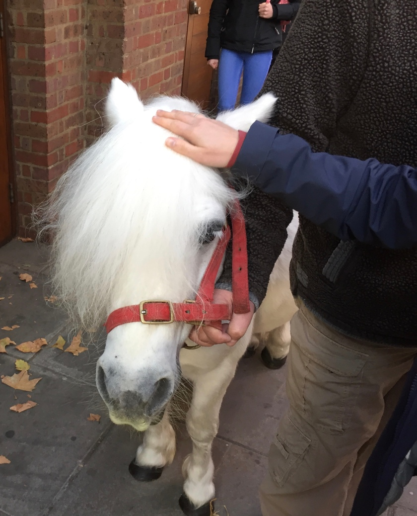 The white pony being stroked by an audience member on the pavement outside the theatre.