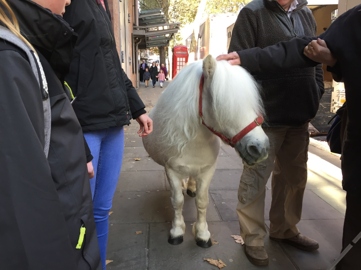 Peregrine, the white Shetland pony, surrounded by audience members on the pavement outside the Sadler's Wells theatre.