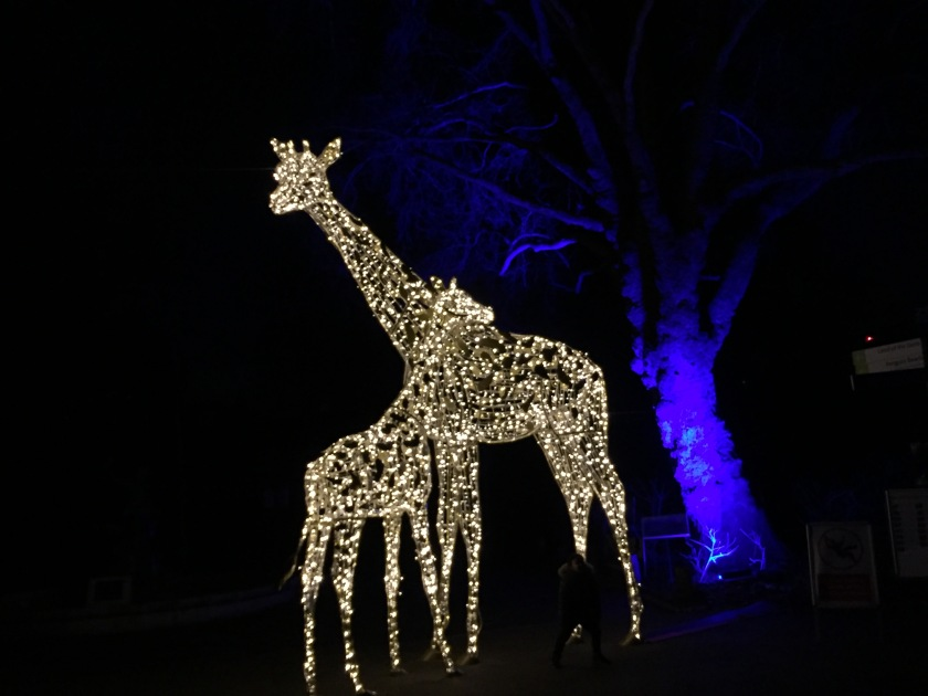 Sculpture of 2 giraffes together, one much taller than the other, made out of lights.