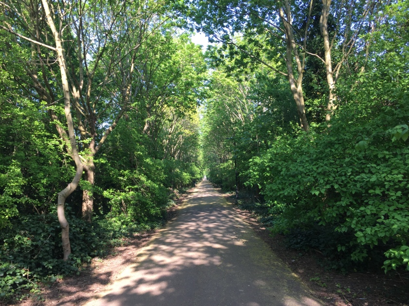 The Beckton Corridor, a long tree-lined walkway, with the sun shining through the gaps in the leaves and branches that meet each other overhead.