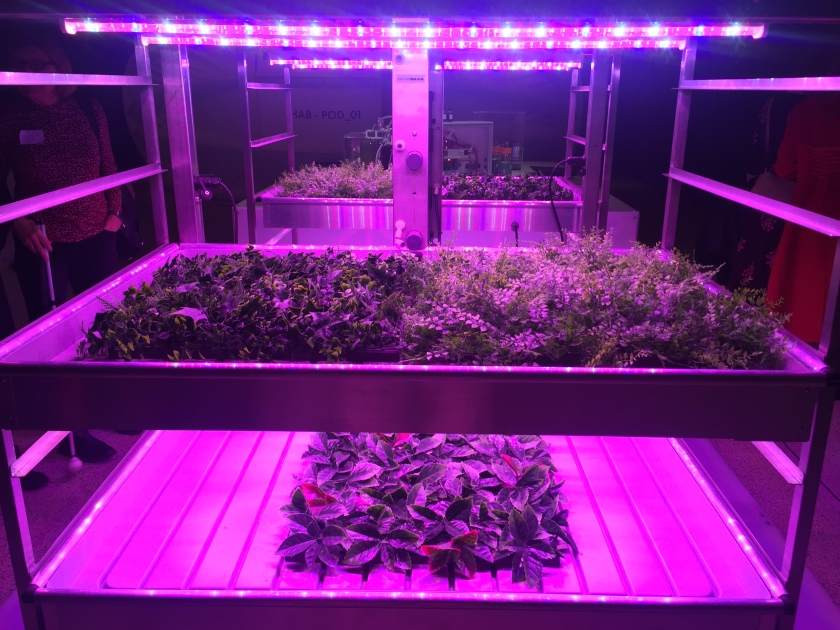 Large open-sided shelving units containing a variety of green plants bathed in pink light, to show how they could be grown on Mars.