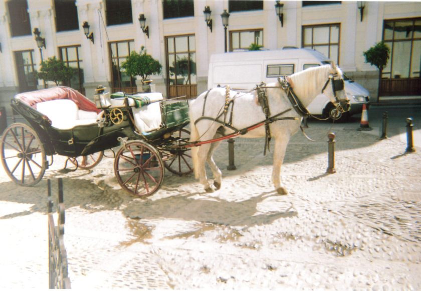 A white horse pulling a roofless carriage in the town of Ronda.
